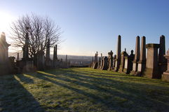 Glasgowcemeterytrees2 Stock Images