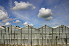 Glashaus Lizenzfreie Stockfotografie