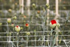 Glashaus mit Blumen Lizenzfreie Stockfotografie