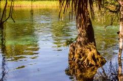 Glashelder rivierlandschap Stock Afbeeldingen