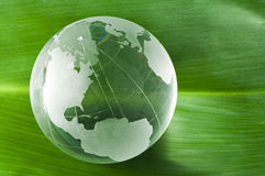 Glaskugel auf grünem Blatt Stockbild