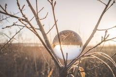 Glaskugel in einem Baum auf einem kalten Morgen stockfoto