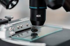 Glasobjektträger mit Fliege im Labor Lizenzfreie Stockfotografie