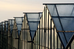 Glass. Greenhouses covered in morning dew royalty free stock photos