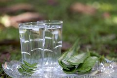 A glass of Aloe Vera juice with Aloe Vera leaves royalty free stock images