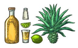 Glass And Botlle Of Tequila. Cactus, Salt, Lime Royalty Free Stock Photos