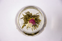 A glass of artisan blooming tea. On white Stock Photography