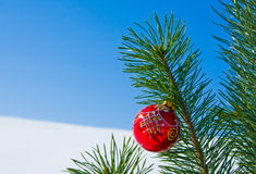 Glass ball on christmas tree Stock Image