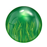 Glass ball with green grass isolated on white back Stock Photo