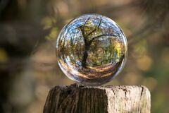 Glass ball reflecting forest