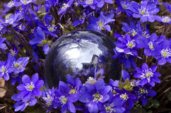 Glass ball and spring violet flowers Royalty Free Stock Photo