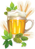 Glass of barley beer with foam Royalty Free Stock Images