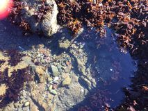 Glass beach and sea weed at Fort Bragg Stock Images