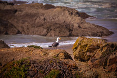 Glass Beach Trail photos in Fort Bragg CA Royalty Free Stock Photo
