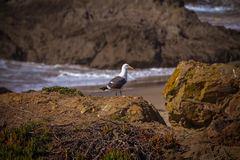 Glass Beach Trail photos in Fort Bragg CA Royalty Free Stock Image