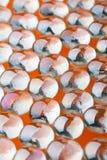 Glass beads Stock Photos