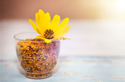 Glass with bee pollen and yellow flower in it. On the table stock photos