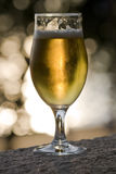 Glass of beer. At sunset Royalty Free Stock Photos