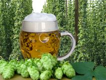 Glass of beer. A glass of beer with wheat and hop cones royalty free stock photography