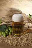 Glass of beer. A glass of beer with wheat and hop cones stock photography