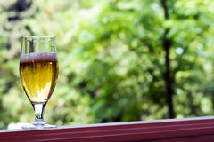 Glass of  beer. Glass of light beer on a background of summer foliage Stock Photo
