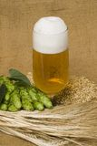 Glass of beer. A glass of beer with wheat and hop cones Royalty Free Stock Photos