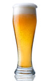 Glass of beer. Fresh glass of beer with froth and condensed water pearls. The file includes a clipping path Royalty Free Stock Images