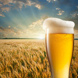 Glass of beer against wheat field Royalty Free Stock Photos