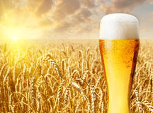 Glass of beer against wheat field Royalty Free Stock Photography