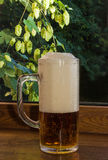 Glass of beer on a background of branches of hops Stock Image