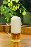 Glass of beer on the background branches with hops Stock Photo