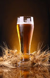 Glass of beer with barley ears Stock Photo