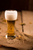Glass of beer and barley rice on wooden table in Golden Light Stock Photography