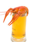 Glass of beer and boiled crawfish closeup on white background Royalty Free Stock Image