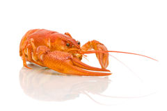 Glass of beer and boiled crawfish closeup on white background Royalty Free Stock Photography