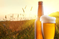 Glass of beer and bottle against wheat field Stock Photos