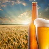Glass of beer and bottle against wheat field and sunset Royalty Free Stock Image