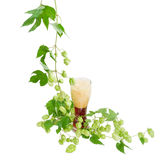 Glass of beer and branch of hops on light background Royalty Free Stock Photo