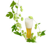 Glass of beer and branch of hops on light background Royalty Free Stock Image
