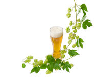 Glass of beer and branch of hops on light background Royalty Free Stock Photos