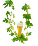 Glass of beer and branches of hops on light background Stock Image