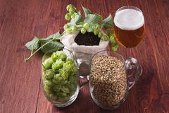 Glass of beer, cones of hop, pale caramel malt in glass mugs and. Chocolate malt in bag, Ingredient in craft beer brewing from grain barley malt. Ale or lager royalty free stock images
