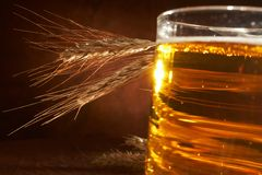 Glass of beer with grain Royalty Free Stock Photos