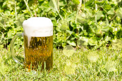 Glass with beer on the green grass Stock Photography