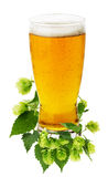 Glass of beer with green hops isolated on the white background Stock Photos