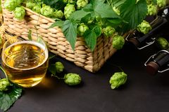 Glass of beer with green hops and wheat ears on dark wooden table Royalty Free Stock Images