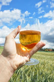 Glass of beer in the hand Stock Image