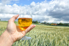 Glass of beer in the hand Royalty Free Stock Image