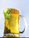 Glass of beer with hop Royalty Free Stock Photo