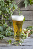 Glass of beer with hop Stock Images